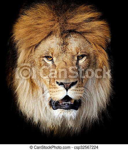 Lion portrait - csp32567224