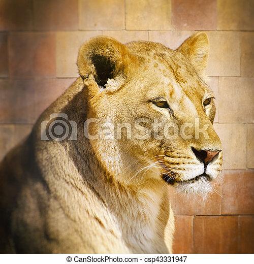Lion Portrait - csp43331947