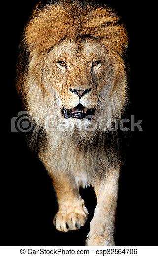 Lion portrait - csp32564706