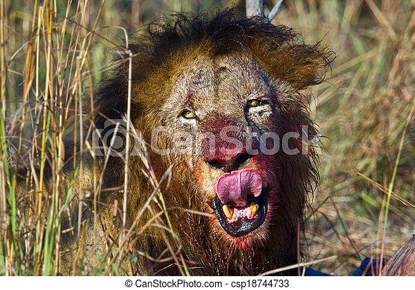 lions of Tanzania National park - csp18744733