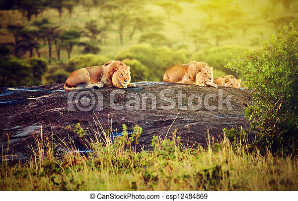 Lions on rocks on savanna at sunset. Safari in Serengeti, Tanzania, Africa - csp12484869