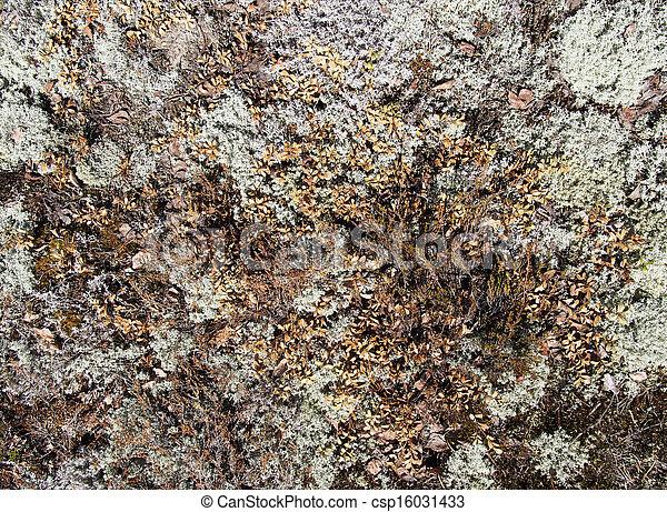 Lichen - csp16031433