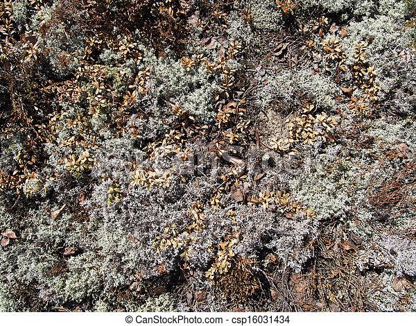 Lichen - csp16031434
