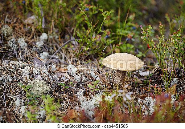 Mushroom entre musgo y lichen - csp4451505