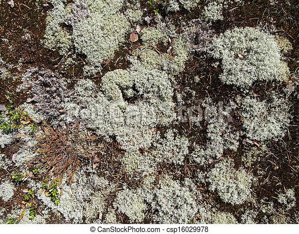 Lichen - csp16029978