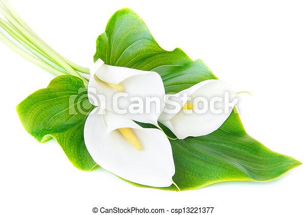 lis, feuille, bouquet, trois, isolé, calla, fond, blanc vert - csp13221377
