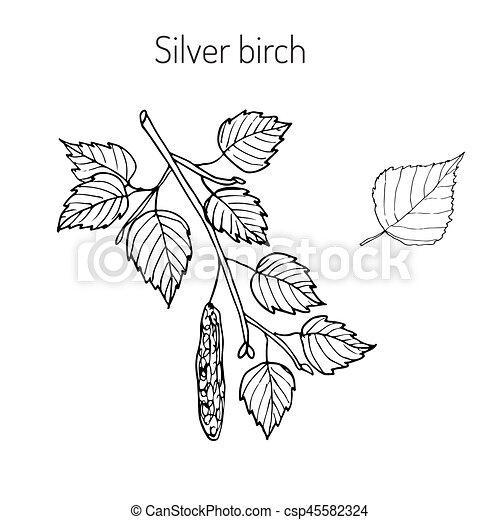 List Stribrny Filialka Briza Leaves Ilustrace Vektor