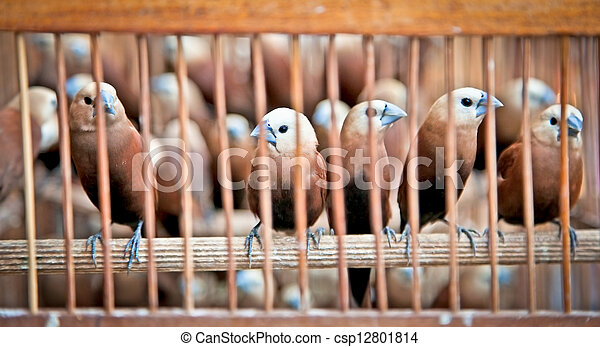 Litle birds in the cage. - csp12801814