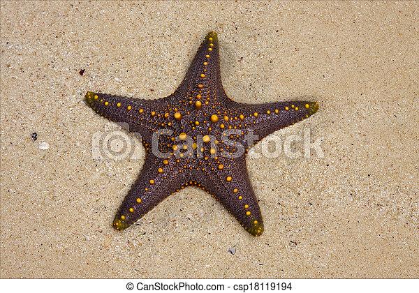 La costa de Starfish en Zanzíbar tanzania - csp18119194
