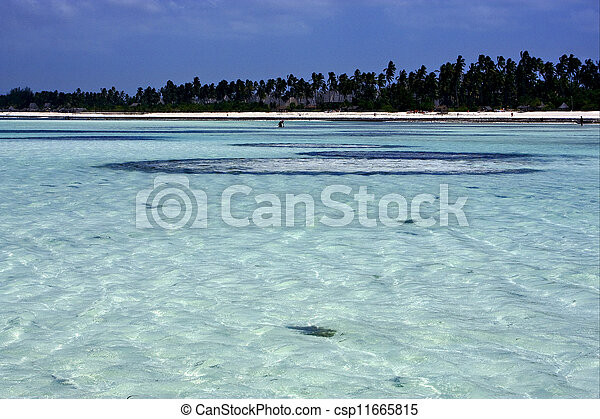 La costa en Zanzíbar - csp11665815
