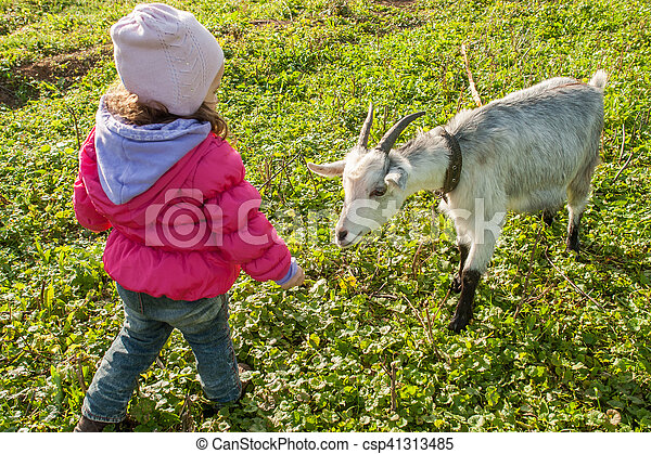 Little baby girl playing with the young goat at village - csp41313485