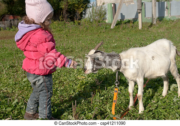 Little baby girl playing with the young goat at village - csp41211090
