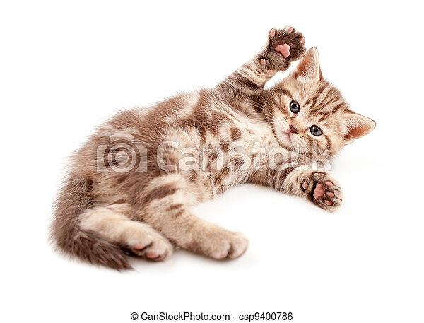 Little baby kitten lying on back - csp9400786