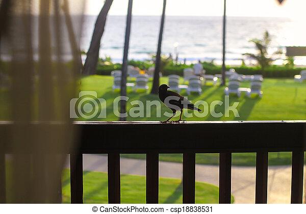 Little bird on the balcony - csp18838531