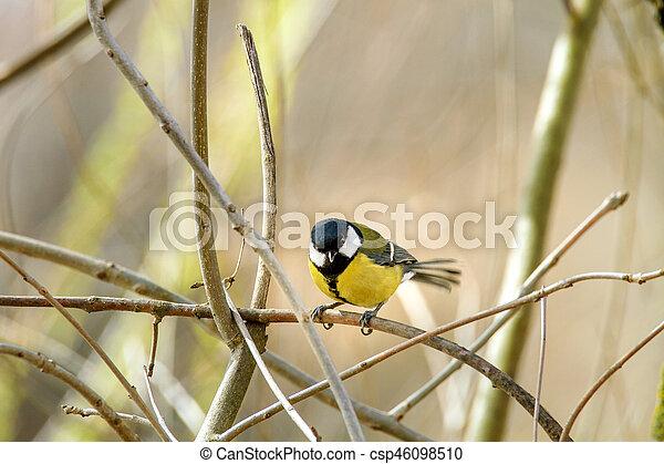 little bird sitting on a branch - csp46098510