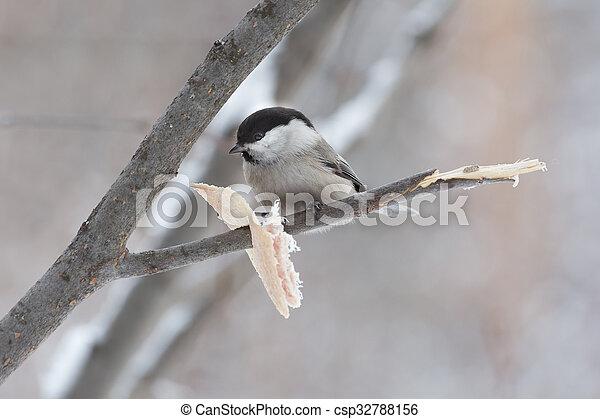 little bird sitting on a branch - csp32788156