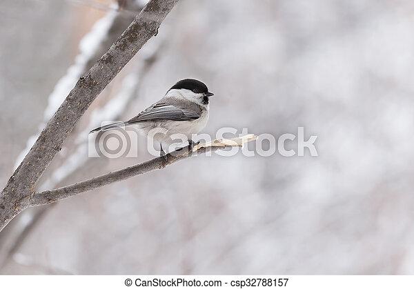 little bird sitting on a branch - csp32788157