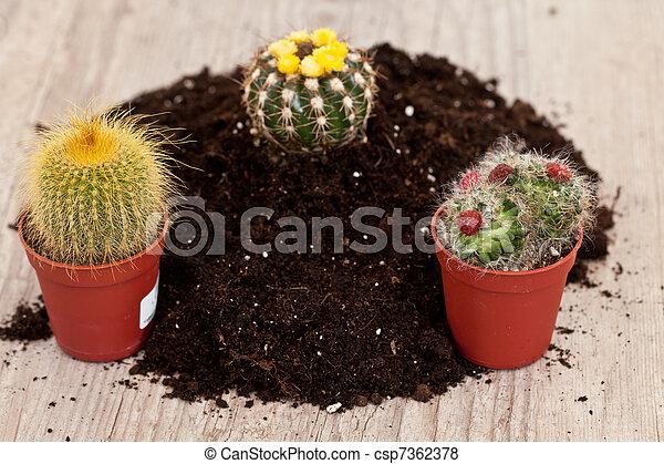 Little cactus plant - csp7362378