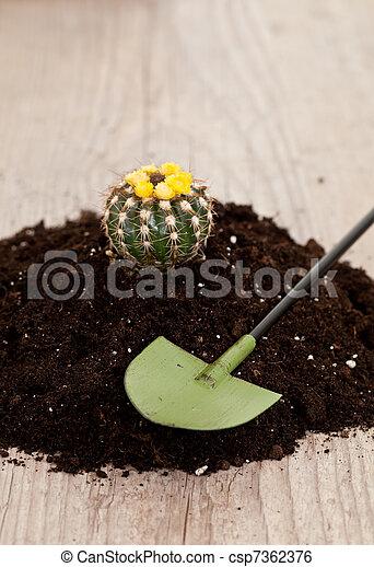 Little cactus plant - csp7362376