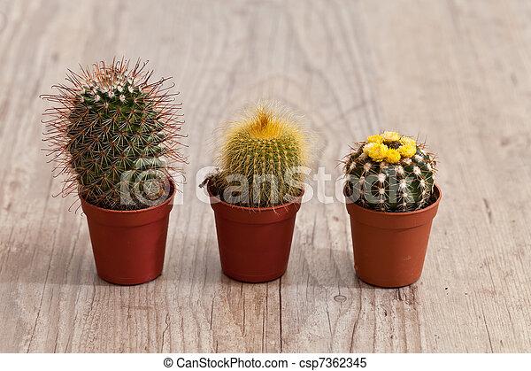 Little Cactus plant - csp7362345