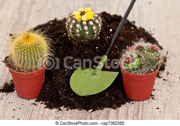 Little cactus plant - csp7362382
