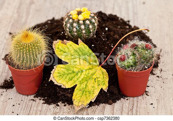 Little cactus plant - csp7362380