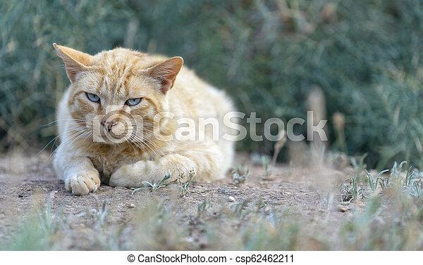 little cat - csp62462211