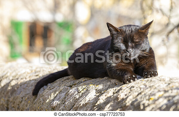 little cat sleeping - csp77723753