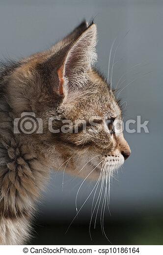 Little cat - csp10186164