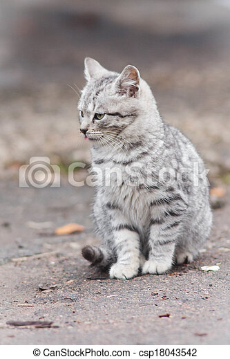 little cat - csp18043542