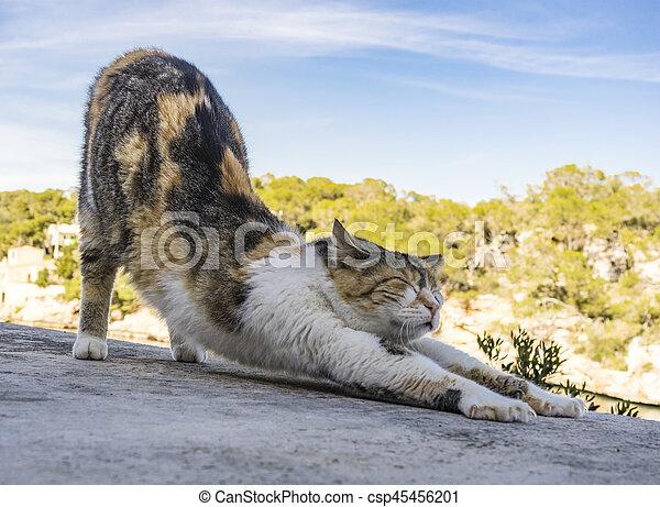 little cat - csp45456201