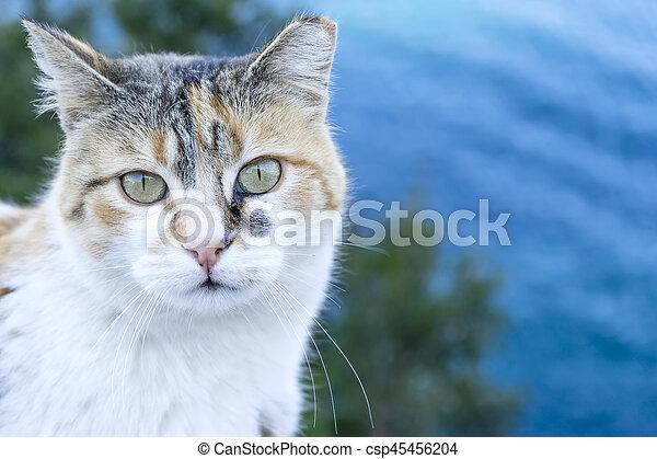 little cat - csp45456204