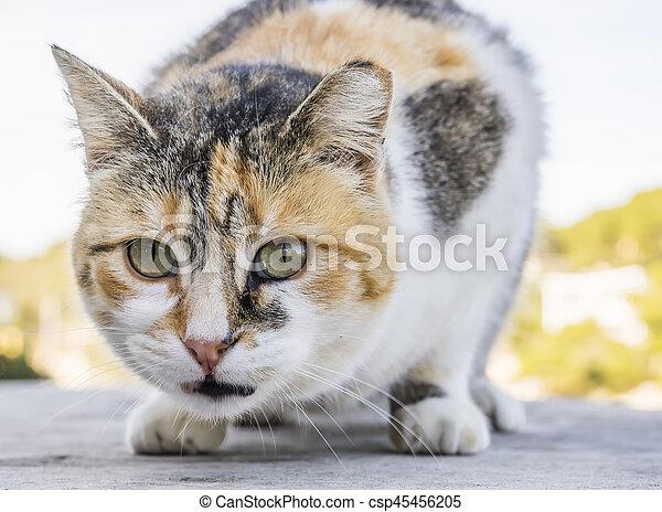 little cat - csp45456205