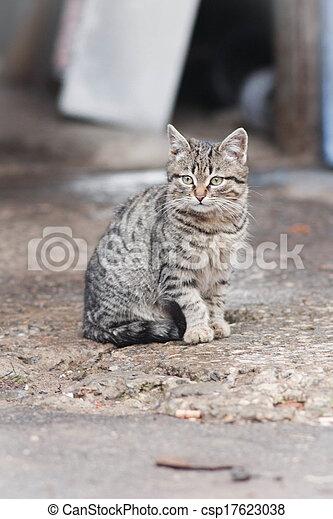 little cat - csp17623038