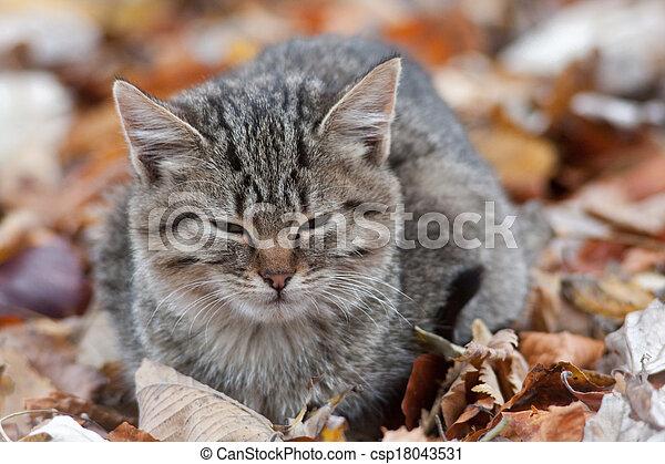 little cat - csp18043531