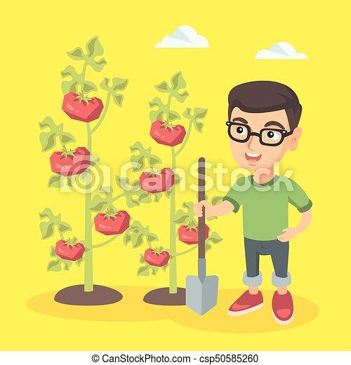 Little caucasian farmer boy cultivating tomatoes. - csp50585260