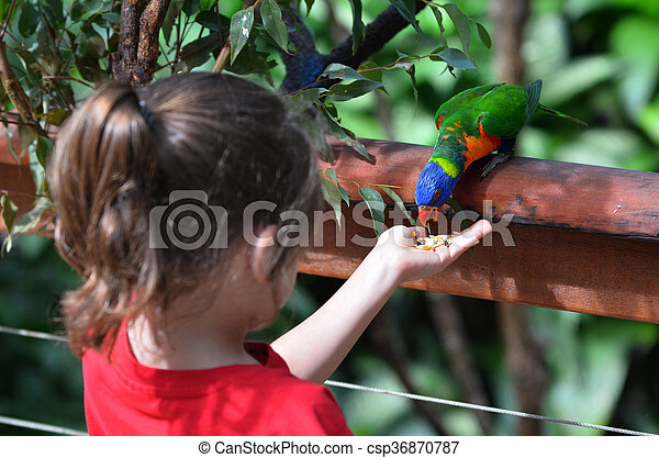 Little Child Feeds A Rainbow Lorikeet Little Child Girl