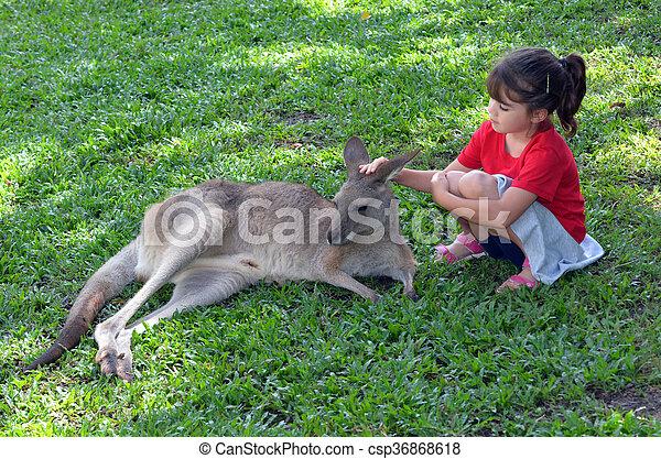 Little child petting grey kangaroo in Queensland, Australia - csp36868618