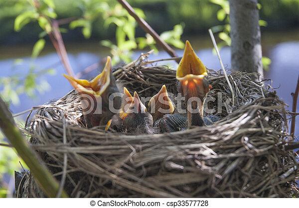 Little children Birds 1 - csp33577728