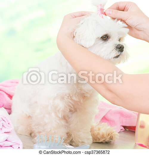 Little dog at spa - csp37365872