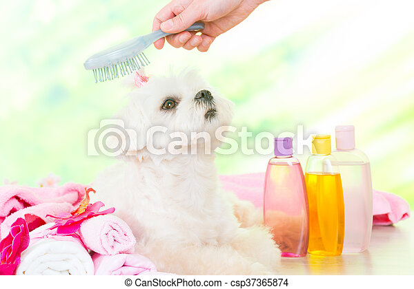 Little dog at spa - csp37365874
