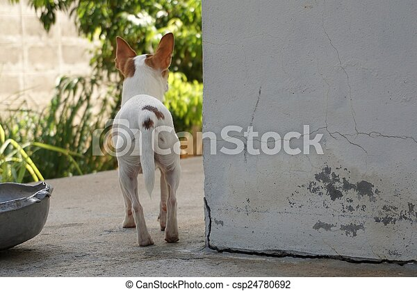 little dog looking for someone - csp24780692