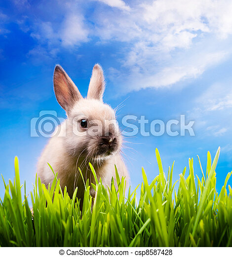 Little Easter bunny on green grass - csp8587428