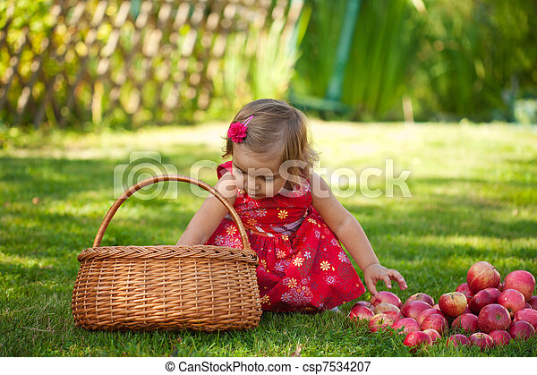 little girl collects the apples scattered on a grass in a basket - csp7534207