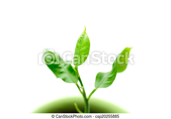 Little Green Plant in Pot on White Background - csp20255885