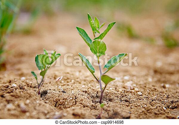 Little green plant - csp9914698