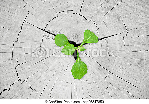 Little green seedling growing from tree stump - csp26847853