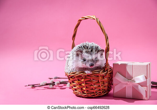 Little hedgehog sits in the basket by the present - csp66492628