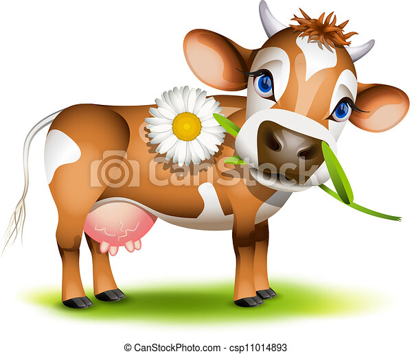 Little Jersey cow eating daisy - csp11014893