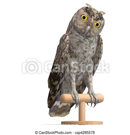 Little Owl Bird. 3D rendering and shadow over white - csp4285578